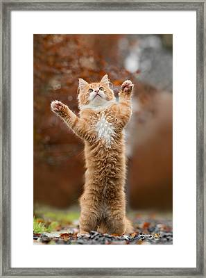 That Mouse Was This Big -red Haired Kitten Framed Print by Roeselien Raimond