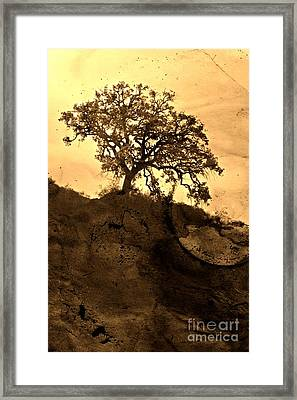 That Old Tree Framed Print by Clare Bevan
