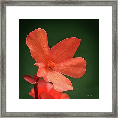 That Orange Flower Framed Print