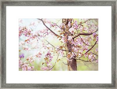 Framed Print featuring the photograph That Tender Joyful Spring by Jenny Rainbow