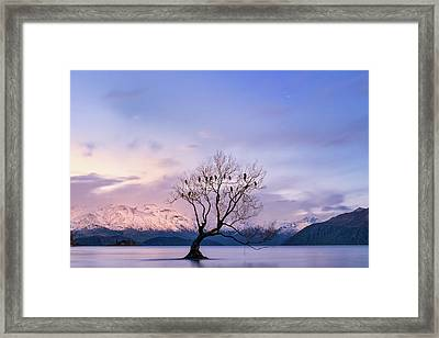 That Wanaka Tree Framed Print