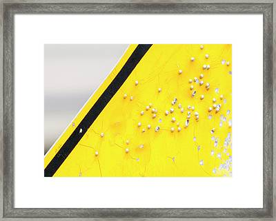 Framed Print featuring the photograph That's Not Braille by Bill Kesler