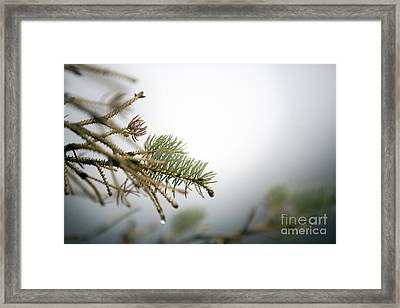 Thaw Framed Print by Jeannie Burleson