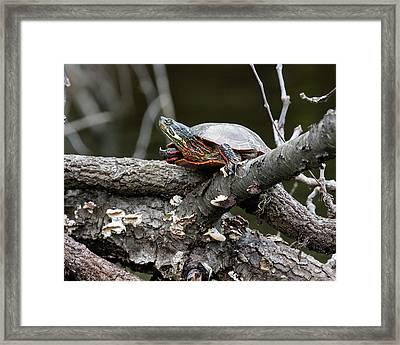 The 14th Project - Installment 105 Framed Print