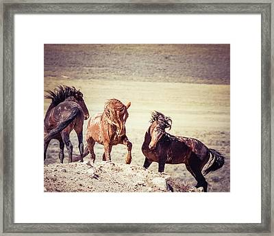 Framed Print featuring the photograph The 3 Amigos by Mary Hone