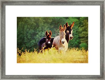 The A Family Framed Print by Darren Fisher