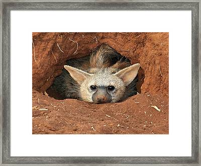 The Aardwolf Framed Print