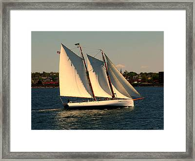 The Adrondack Newport Framed Print by Tom Prendergast