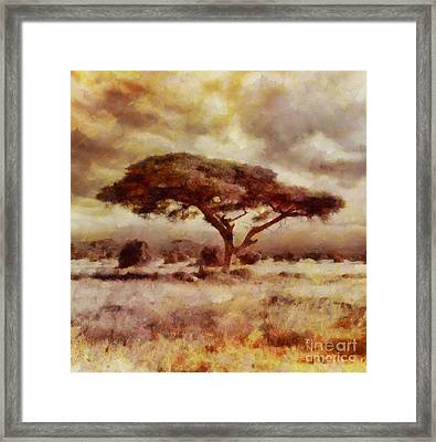 The African Tree By Sarah Kirk Framed Print
