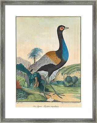The Agami In A Lush Green Forest Landscape With Rocks. Psophia Crepitans Framed Print