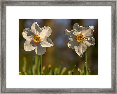 The Ageing Process Framed Print by Chris Fletcher