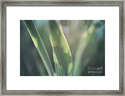 The Allotment Project - Sweetcorn Leaves Framed Print