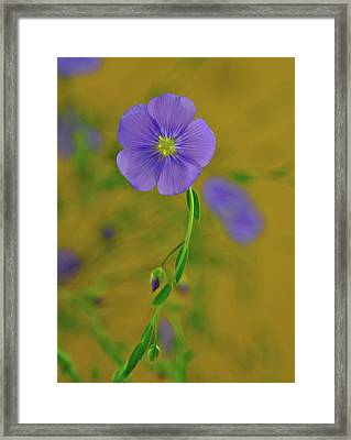 The Allure Framed Print