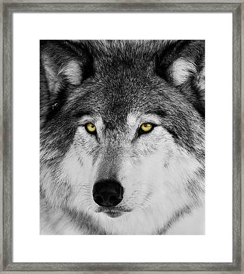 Framed Print featuring the photograph The Alpha Portrait by Mircea Costina Photography