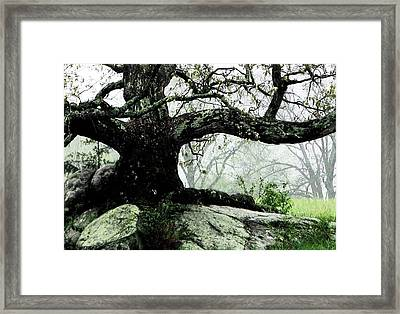 The Ancient One Framed Print by Angela Davies
