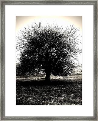 The Ancient Sentinel Framed Print by John McGarity