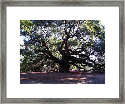 The Angel Oak In Charleston Sc Framed Print by Susanne Van Hulst