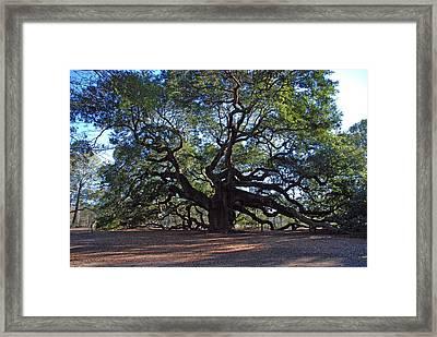 The Angel Oak In Spring Framed Print by Susanne Van Hulst