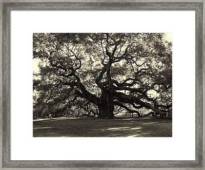 The Angel Oak Framed Print by Susanne Van Hulst