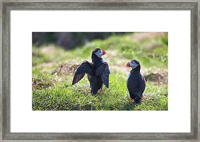 The Angel Puffin Framed Print