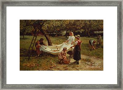 The Apple Gatherers Framed Print by Frederick Morgan
