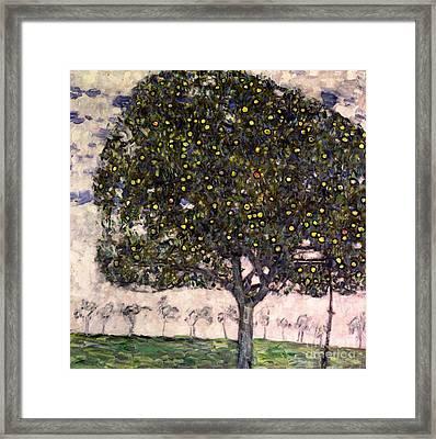 The Apple Tree II Framed Print by Gustav Klimt