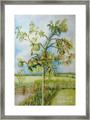 The Apple Tree Framed Print by Joan Thewsey