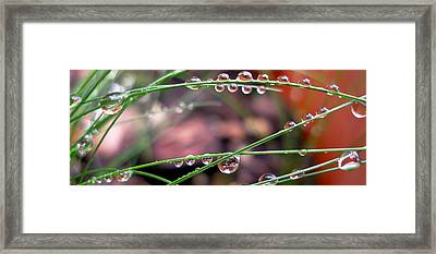 The Art Of Dew Drops Framed Print by Irma BACKELANT GALLERIES