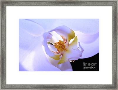 The Art Of Happiness Framed Print by Krissy Katsimbras