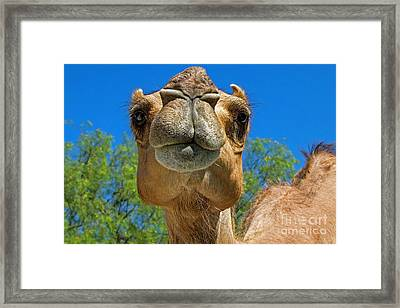 The Art Of Persuasion Framed Print by Gary Holmes