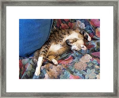 The Art Of Sleeping Framed Print