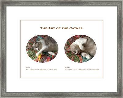 The Art Of The Catnap Framed Print by Bonnie Follett