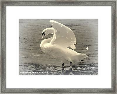 The Art Of The Swan  Framed Print