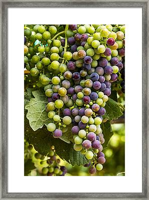 The Art Of Wine Grapes Framed Print by Teri Virbickis