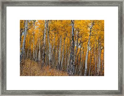 The Aspen Grove Framed Print by Hudson Marsh