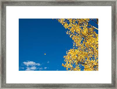 The Aspen Leaf Framed Print
