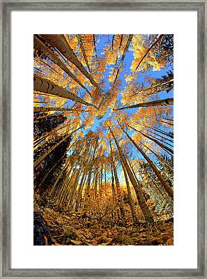 Framed Print featuring the photograph The Aspens Above - Colorful Colorado - Fall by Jason Politte
