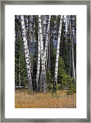 Framed Print featuring the photograph The Aspens by John Gilbert