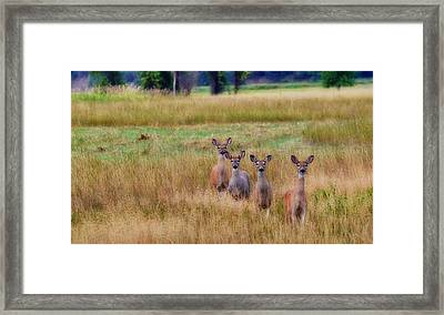 The Audience Framed Print by Annie Pflueger