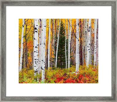 The Autumn Forest Framed Print
