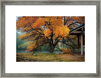 The Autumn Tree Framed Print