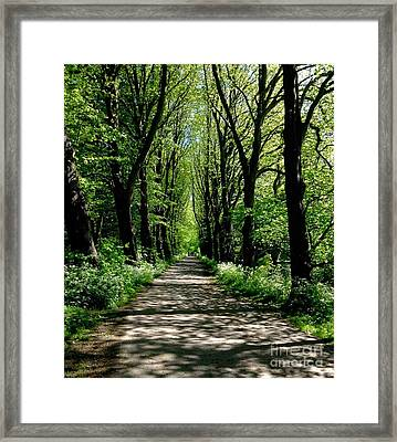 The Avenue Of Limes At Mill Park 3 Framed Print
