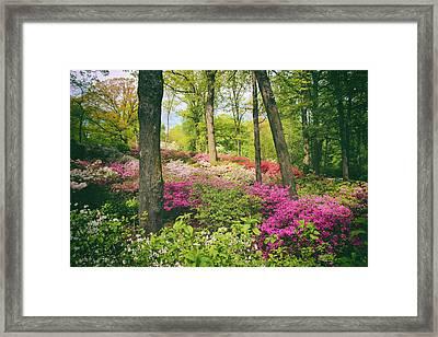 The Azalea Woodland Framed Print by Jessica Jenney