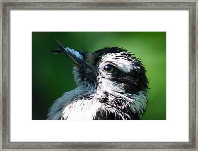 The Baby With Suet Framed Print by Bonnie Brann
