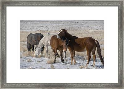 The Bachelor Pad  Framed Print by Nicole Markmann Nelson