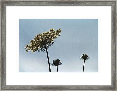 Framed Print featuring the photograph The Back Story by Wanda Brandon