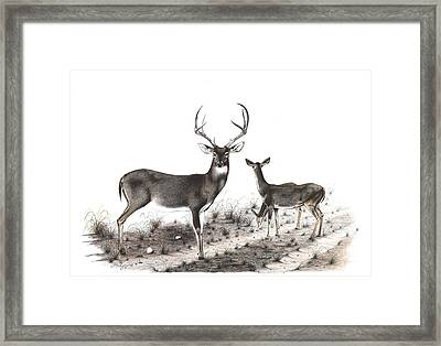 The Backroad Framed Print by Steve Maynard