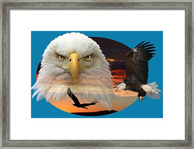 The Bald Eagle 2 Framed Print by Shane Bechler