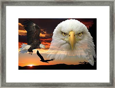 The Bald Eagle Framed Print by Shane Bechler