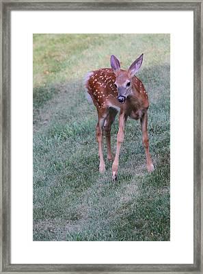 The Bambi Stance Framed Print by Karol Livote